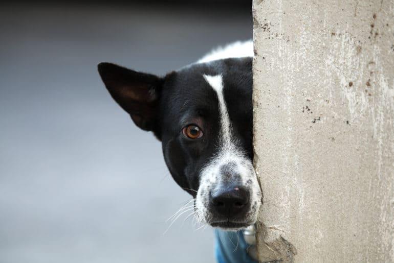 dog behind wall.