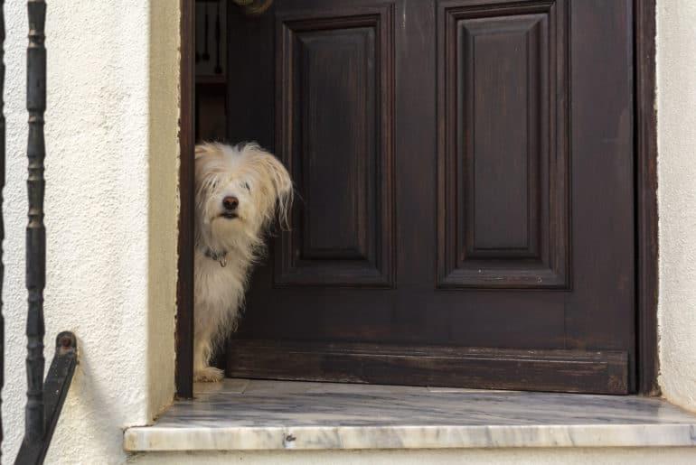 White Dog peeking in door of the house