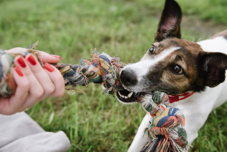 dog play with rope