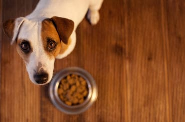 Pet eating food