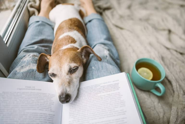 Napping dog and book.