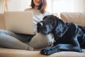 Dog on owner