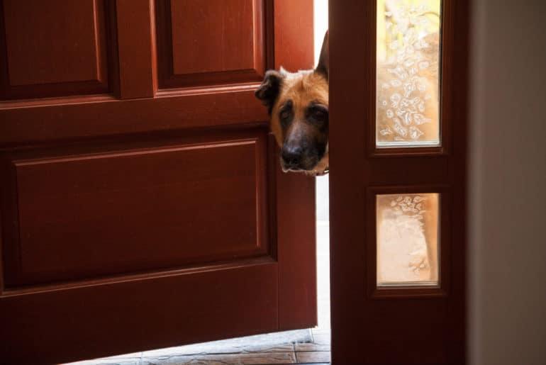 Dog peeks in door