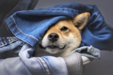 Clothes around dog