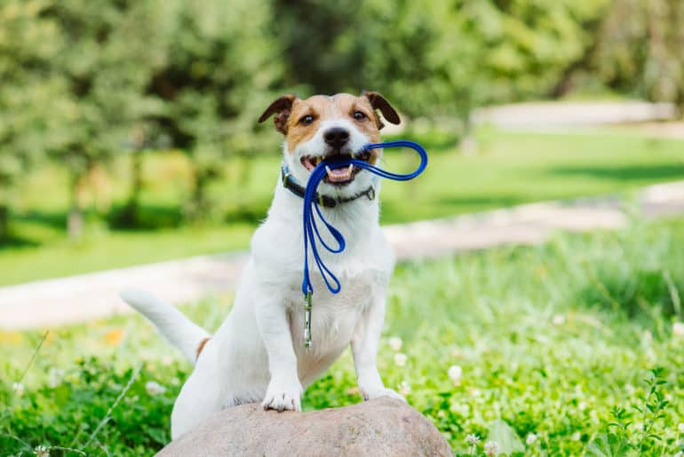 Concept of happy morning walk with a dog at park