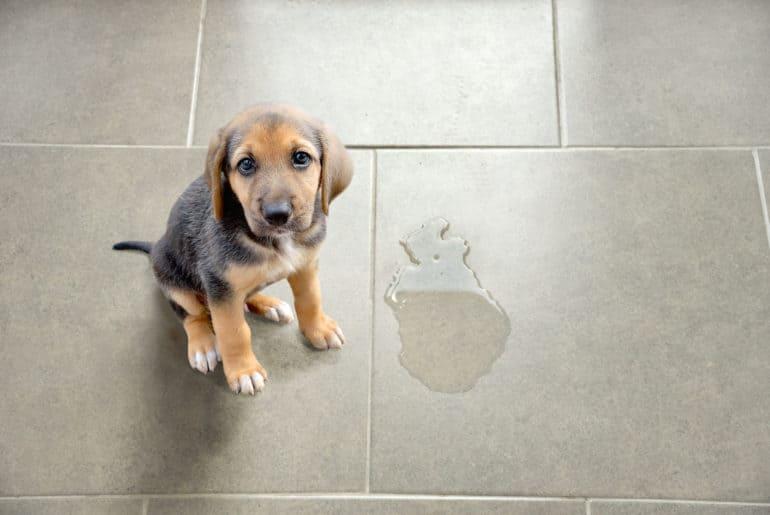 Cute puppy sitting near wet spot